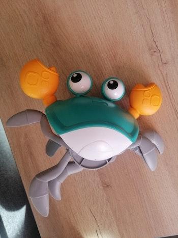 Crabe qui marche
